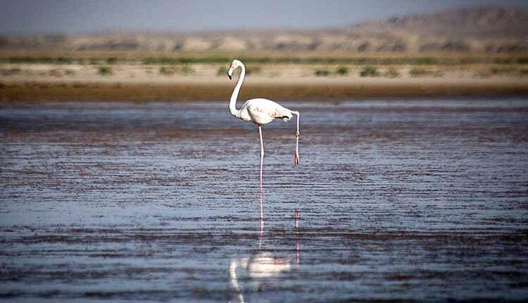 International wetlands in Iran-min
