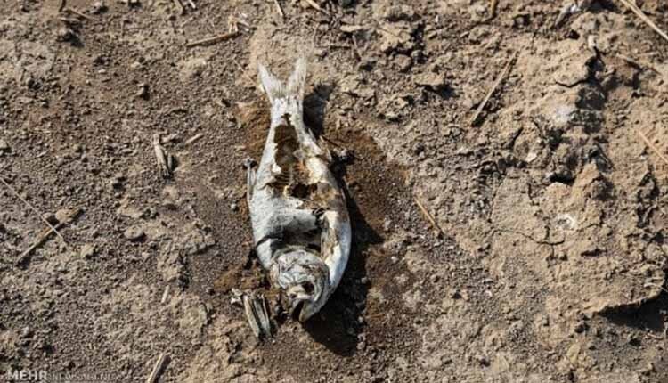 Fish Fatalities Iran